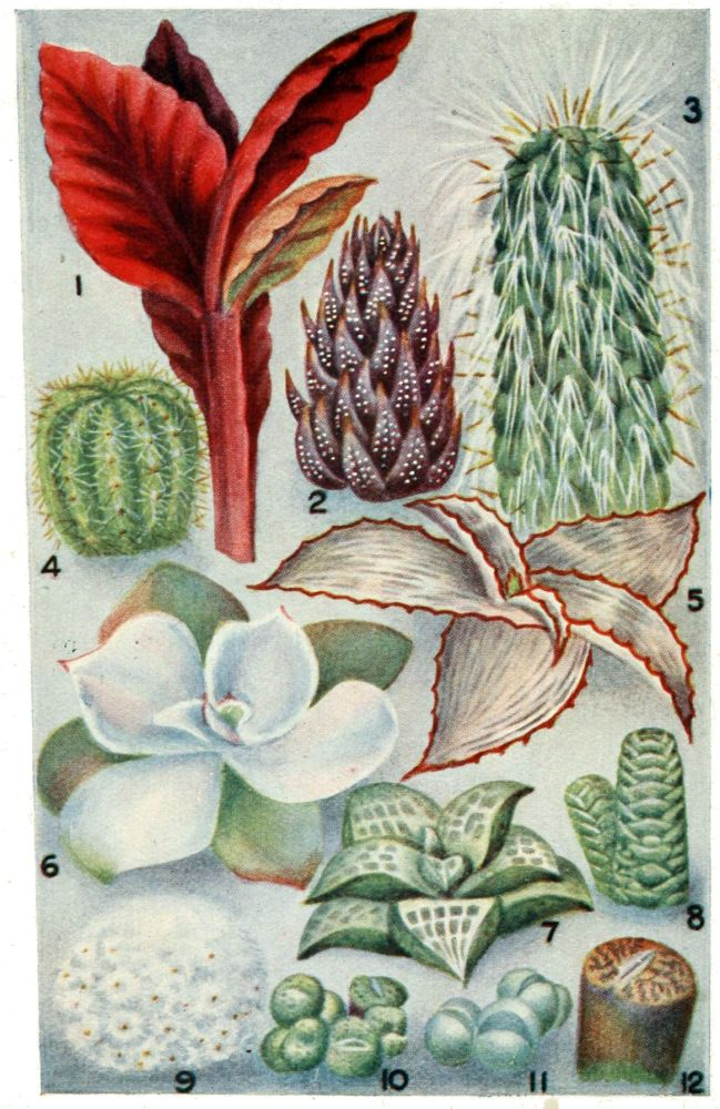 The project gutenberg ebook of aspects of plant life by robert image unavailable mightylinksfo