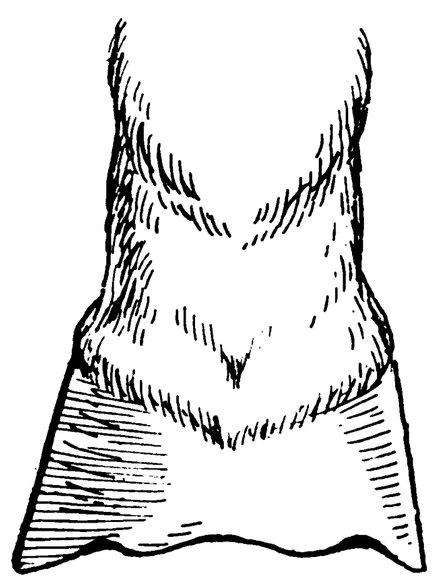 The Project Gutenberg Ebook Of Bailys Magazine Vol Lxxxv