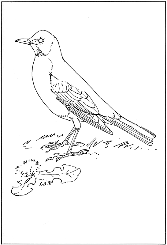 A Manual Of Bird Study A Project Gutenberg Ebook