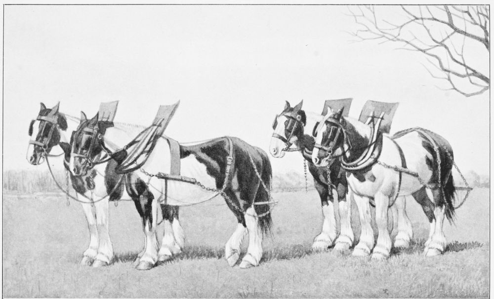 The project gutenberg ebook of the great horse by sir walter gilbey image unavailable plough teams of shire horses fandeluxe Gallery