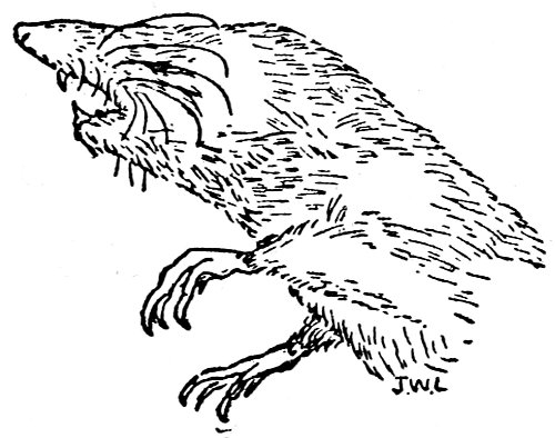 Red Ben The Fox Of Oak Ridge By Joseph Wharton Lippincott A