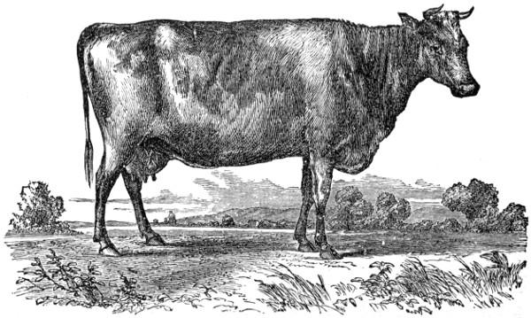 "Pre-cut Natural Leather Cow Hide Veg Tan 4/"" x 6/"" 6-7ounces smooth"