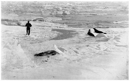fe182107e5e0 The Project Gutenberg eBook of Shackleton s Last Voyage