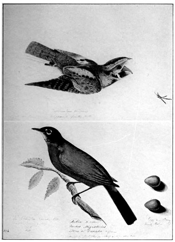 Common American Swan Ariel Press FOLIO Audubon Birds of America