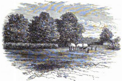 HELEN APRIL ROSE Limited Print of TUSKER ELEPHANT wildlife art watercolour 418