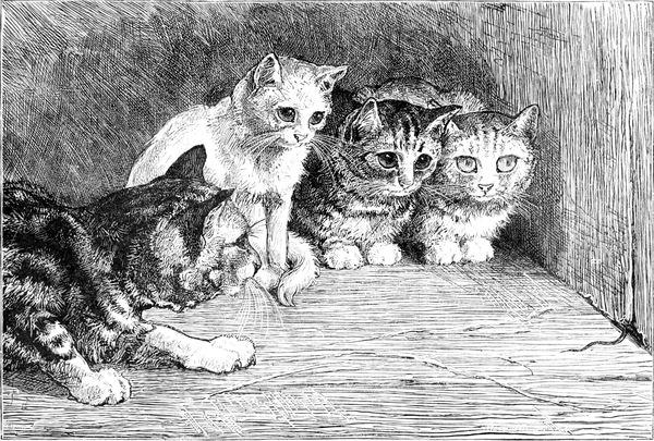 tiger cat mountain lion kitty   VINYL DECAL STICKER 63