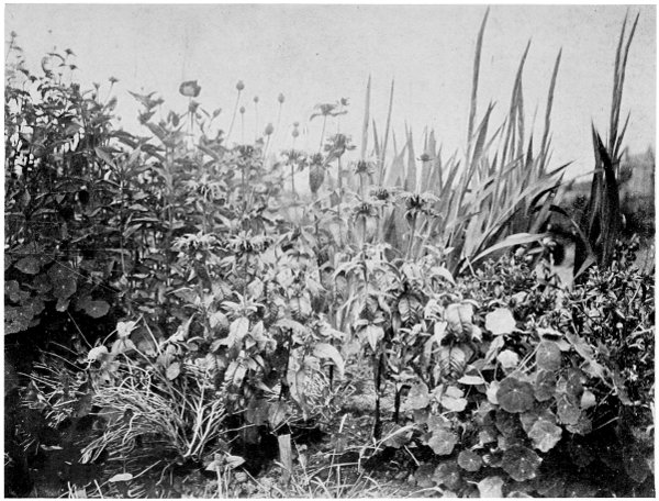 35 best images about tuscan flower arrangements on.htm the project gutenberg ebook of the book of herbs  by rosalind  the project gutenberg ebook of the book