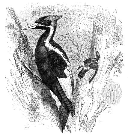 2000 interactive animated woodpecker /& goldfinch living garden