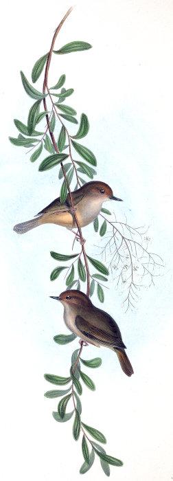 Antique Nesting BIRDS Robins Eggs SPRING Blossoms PRAY BELIEVE TRUST Art Print