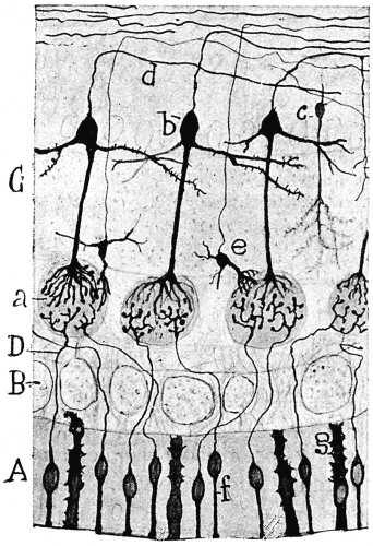 Recuerdos De Mi Vida 2 De 2 By Santiago Ramón Y Cajal A