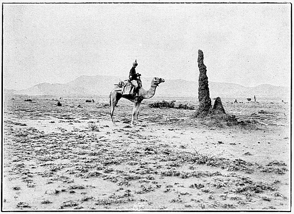 NEVADA CAMEL TRAIN SOUTHWEST FRONTIER BEAST OF BURDEN CARRYING LUGGAGE CARGO