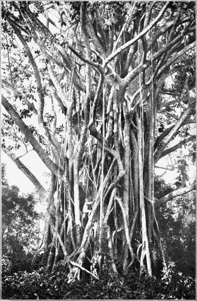 50cm Ur altes Baum Stamm Relief Skulptur Eisen Holz