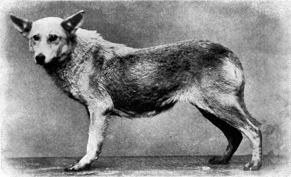 Jagdhund Hund Hound Kopf Bronze Tisch Glocke Skulptur Griff Tier Edel Verzierung
