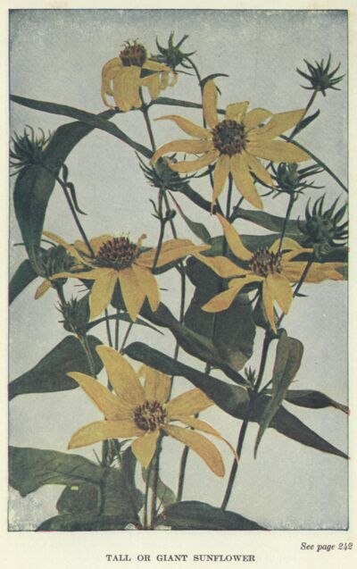 The project gutenberg ebook of wild flowers worth knowing by neltje the project gutenberg ebook of wild flowers worth knowing by neltje blanchan et al fandeluxe Image collections